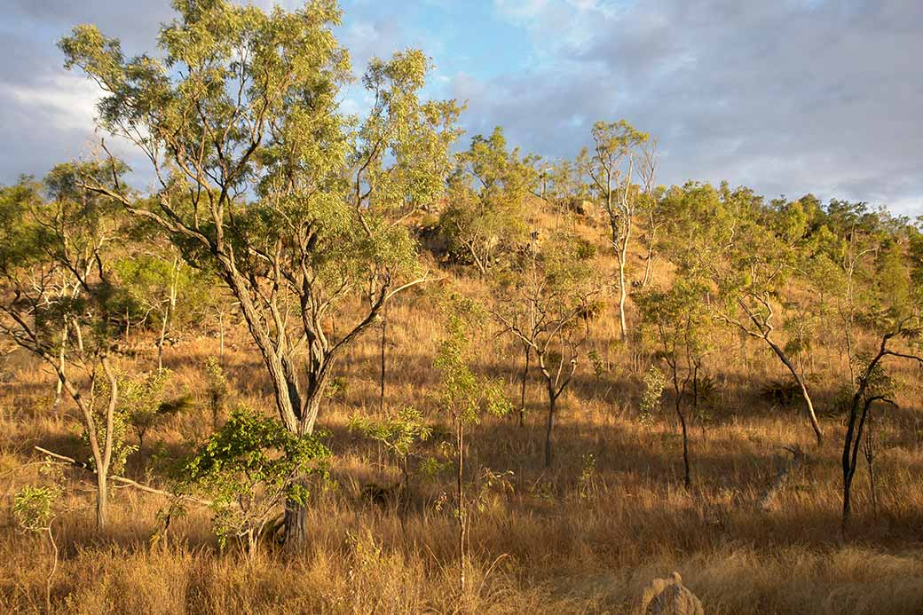 Typical bush landscape | Old Mining towns | North Queensland